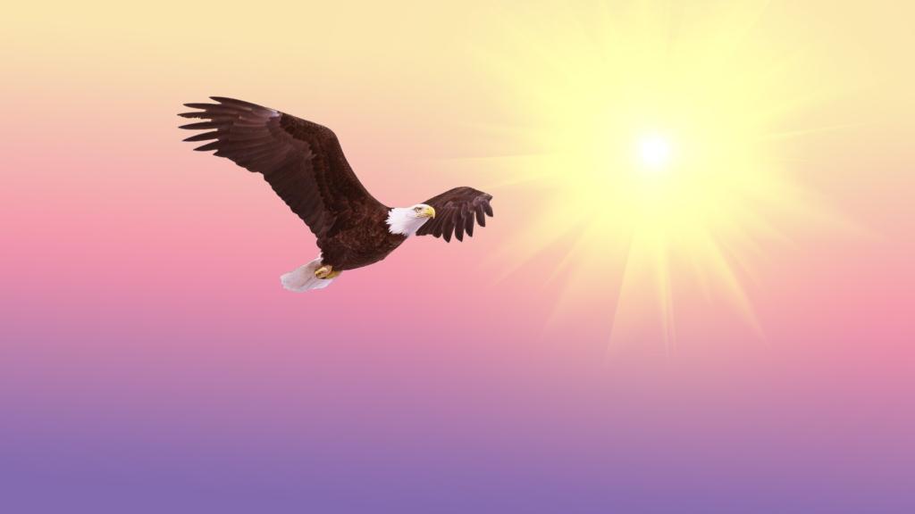 羽ばたく、飛び立つ画像