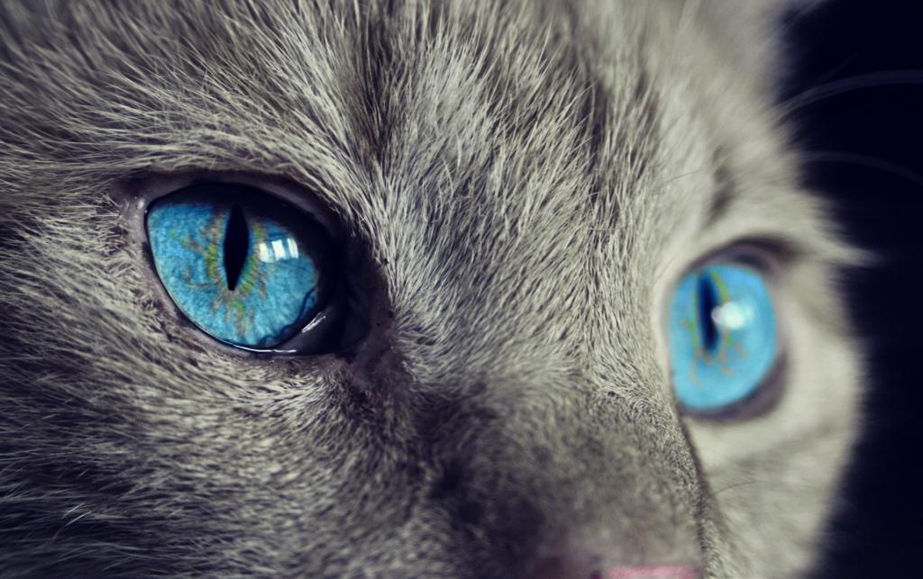 猫の目、ビュー