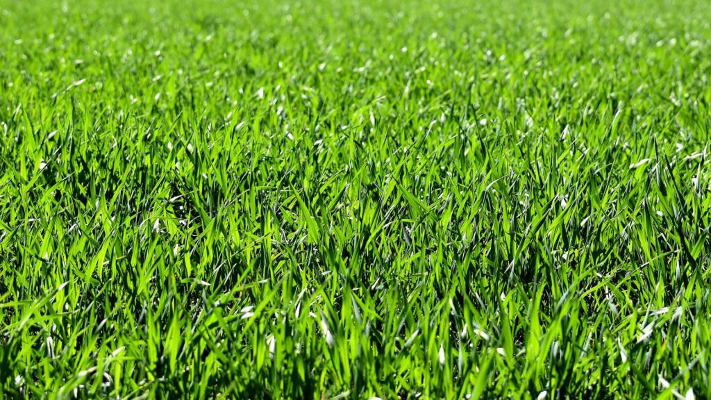 草原の画像